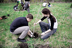 Tree Planting in East Liberty