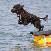Questyinz:  Where can dogs swim in Pittsburgh?