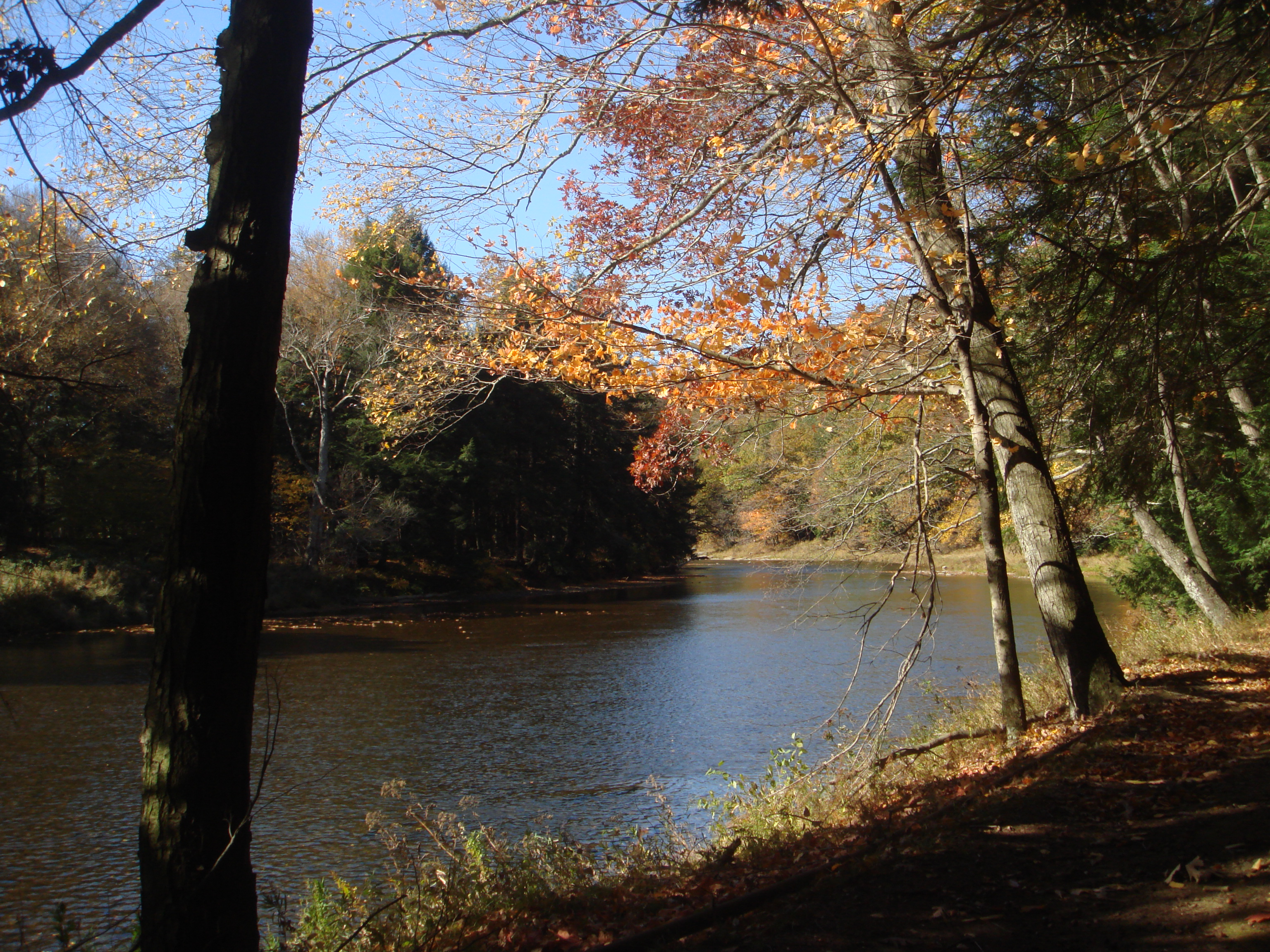 Clarion River at Cook Forest, as seen from River Trail (Photo by Andrew)