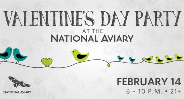 valentines-day-aviary